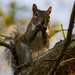 Squirrel Snack!
