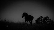 19th Feb 2017 - Pony