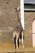 14th Aug 2010 - Standing Tall!
