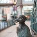 Wild Life bird shot - sortof