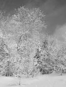 20th Feb 2017 - Frosty morning