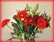 20th Feb 2017 - Beautiful flowers