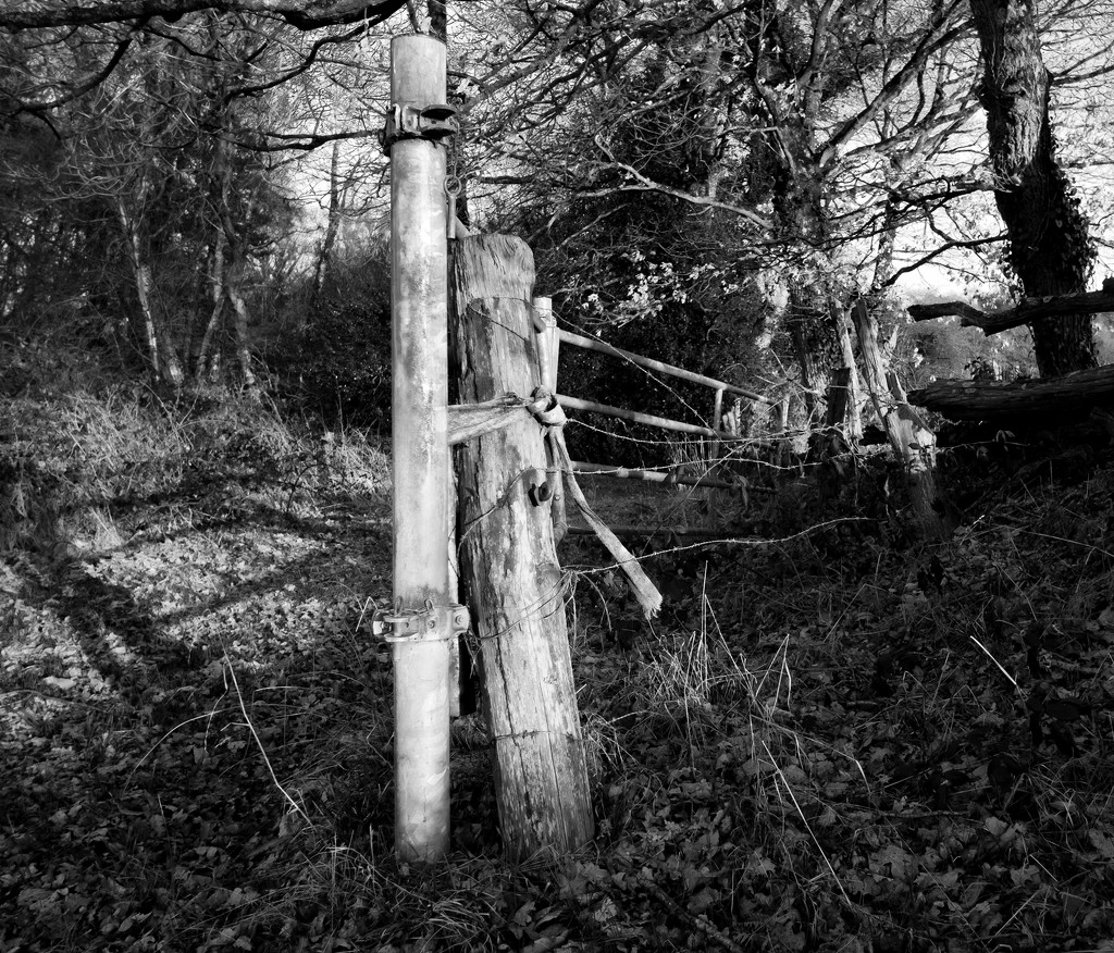 PLAY Feb - Fuji 18mm f/2: Occasional Fence-Post 16 by vignouse