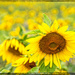 Yellow to cheer you by danette