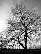 21st Feb 2017 - Tree