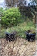 23rd Feb 2017 - Rain on the Window