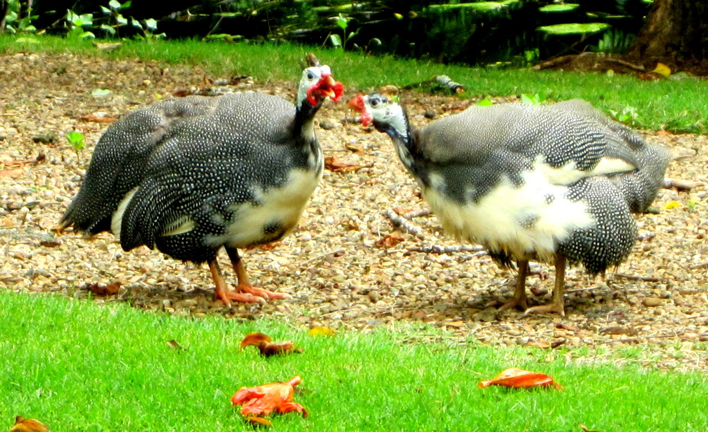 Found these birds having a chat. Botanical Gardens by 777margo