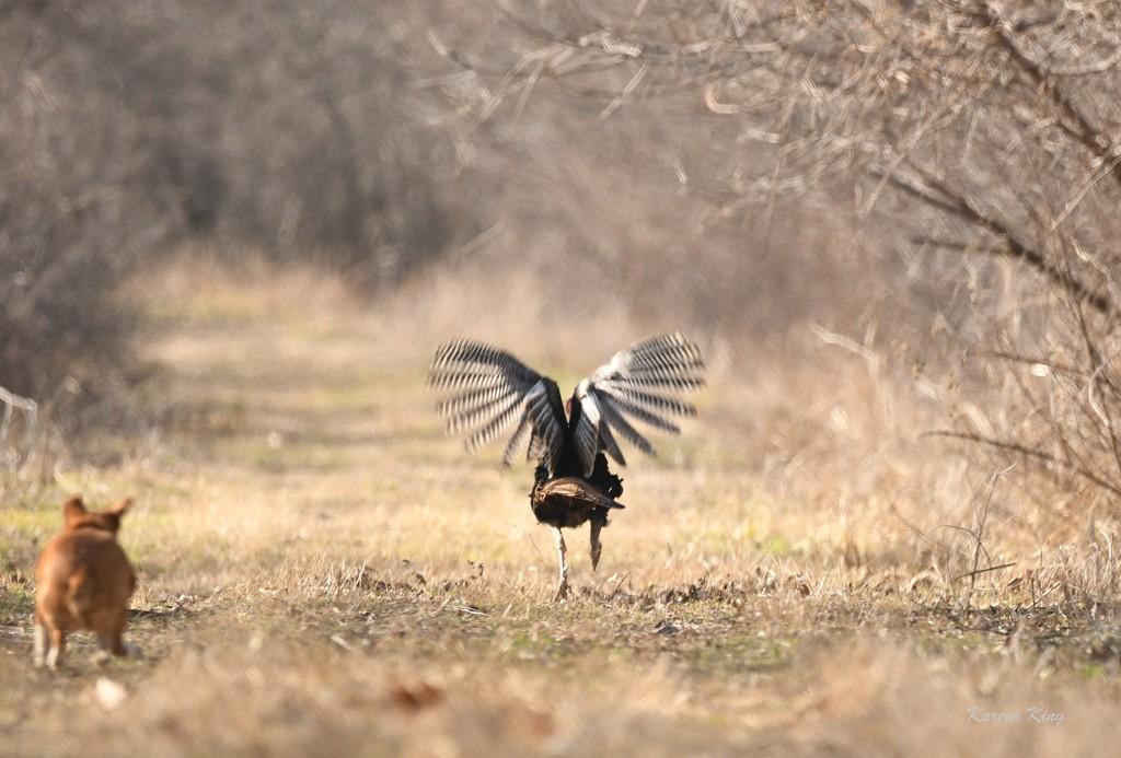 Run, Tom, Run! by kareenking