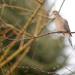 Dove on a rainy day! by fayefaye