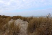 24th Feb 2017 - Dunes