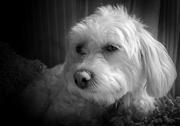 24th Feb 2017 - PLAY Feb - Fuji 18mm f/2: Mitzi Day Dreaming...