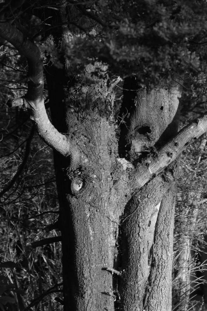 Tree creatures by kiwinanna