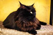24th Feb 2017 - black cat indeed !