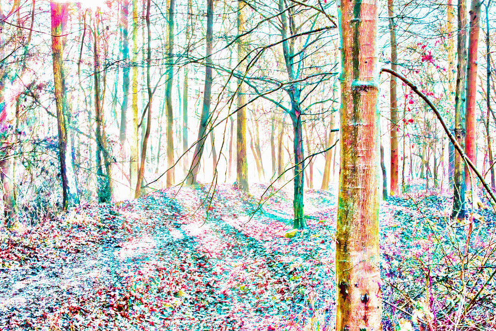 2017 02 25 - Fairy Woods by pamknowler