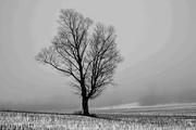 25th Feb 2017 - Lone Tree