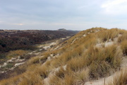 25th Feb 2017 - Into the dunes