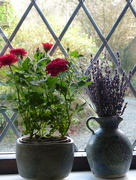 24th Feb 2017 - Flowers in the window