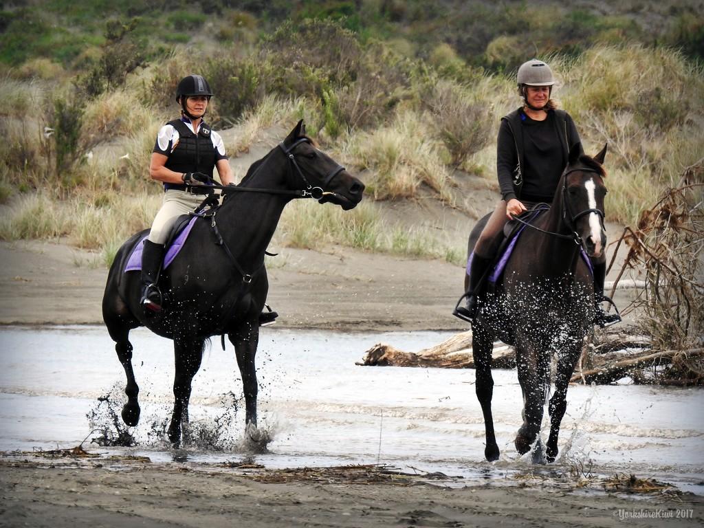 Exercising the Horses by yorkshirekiwi