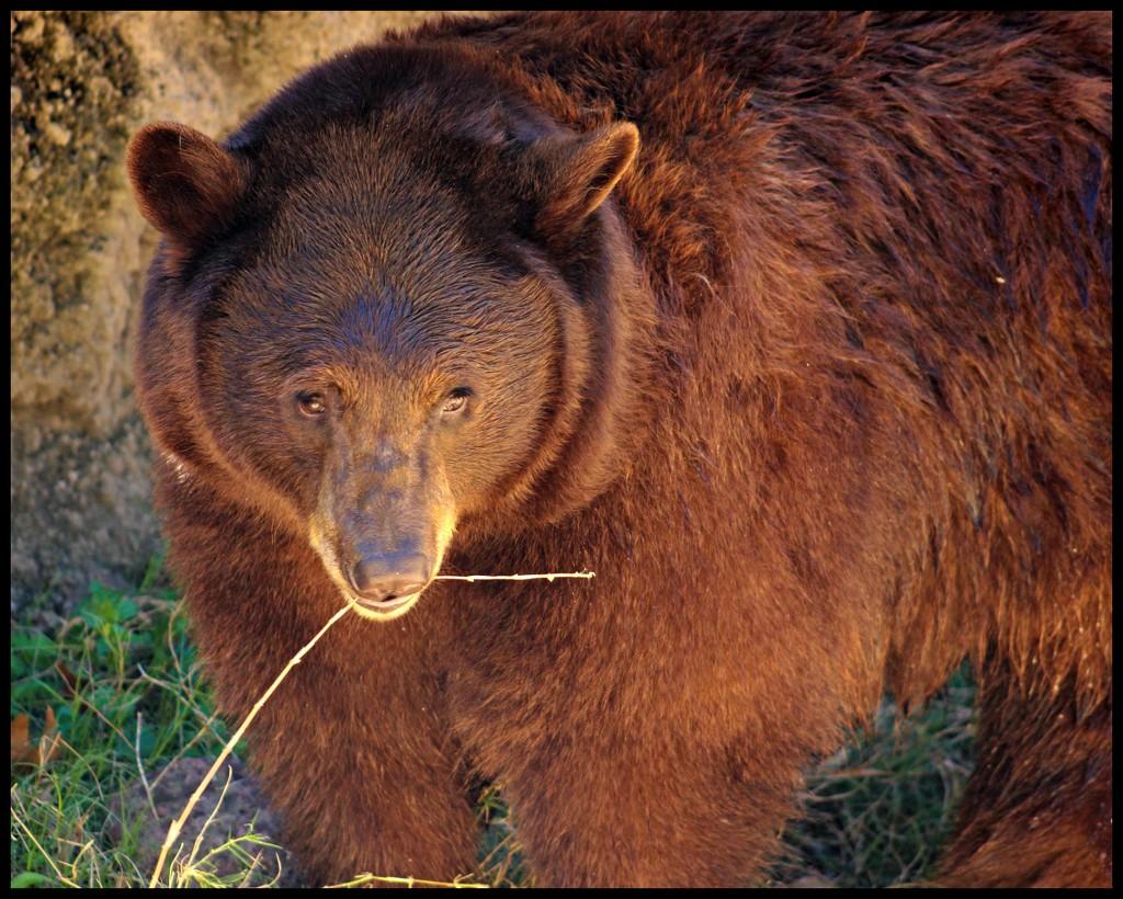 """Tonight was a """"Bear"""" (heehee) by dmrams"""