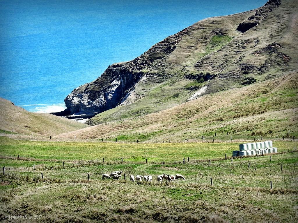 Farmland by yorkshirekiwi