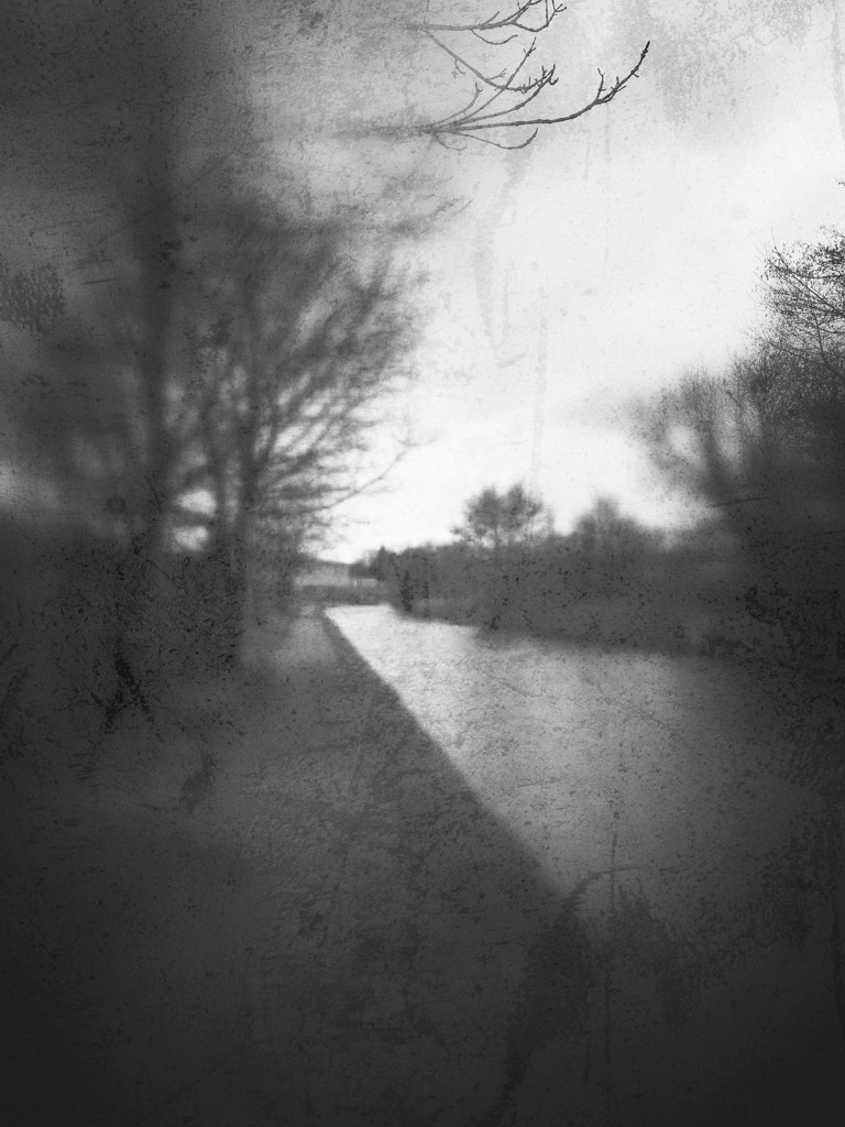 Trees and towpath by rachelwithey