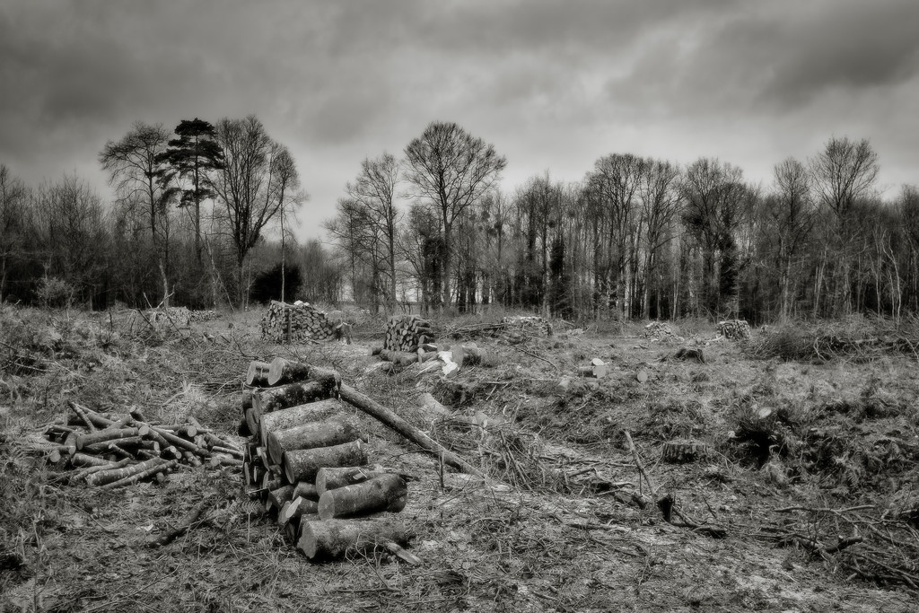 PLAY Feb - Fuji 18mm f/2: Some Still Standing by vignouse