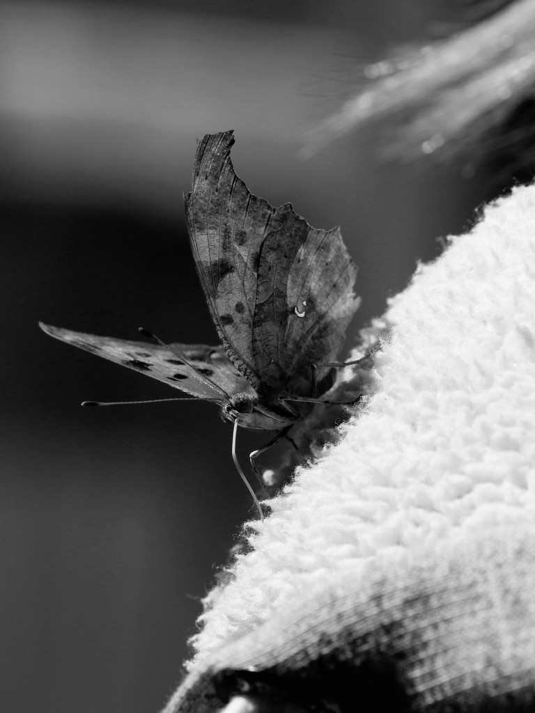 Confused butterfly by ingrid01