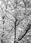 27th Feb 2017 - Snowy Morning