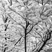 Snowy Morning  by epcello