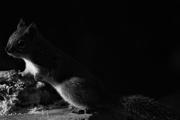 27th Feb 2017 - Squirrel