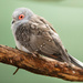 Bird on a Perch  by nicolecampbell