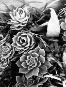 27th Feb 2017 - Plants