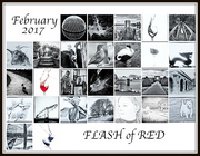 1st Mar 2017 - 2017 03 01 - Flash of Red