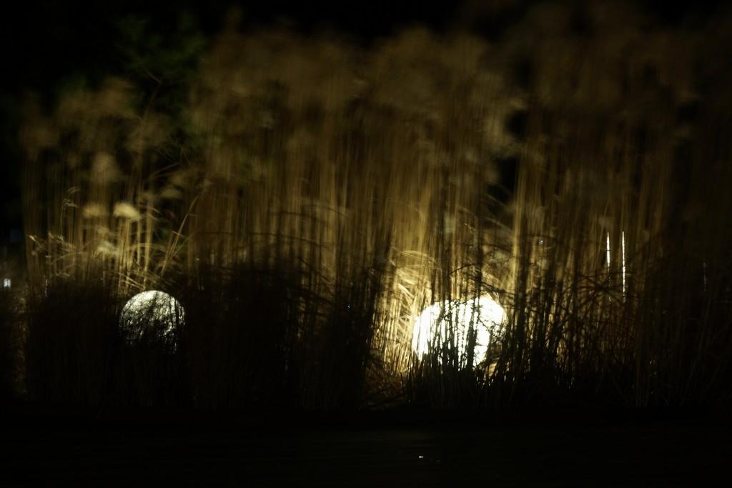 Balls of light by runner365