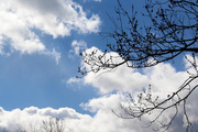 3rd Mar 2017 - Tree branches in the clouds