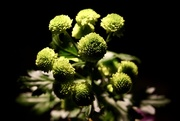 2nd Mar 2017 - 61/365 - Spotlight on Green