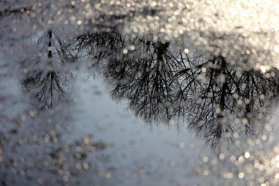 Snow Bokeh by jamibann