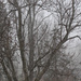 Tree in a snow squall by mittens