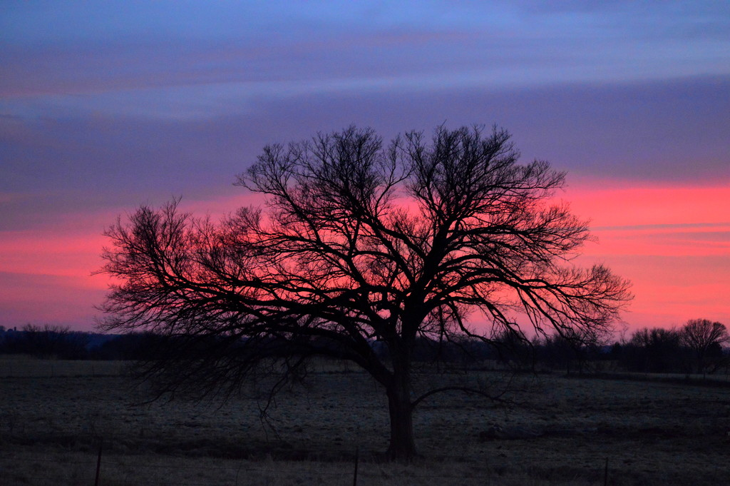 Treescape by kareenking