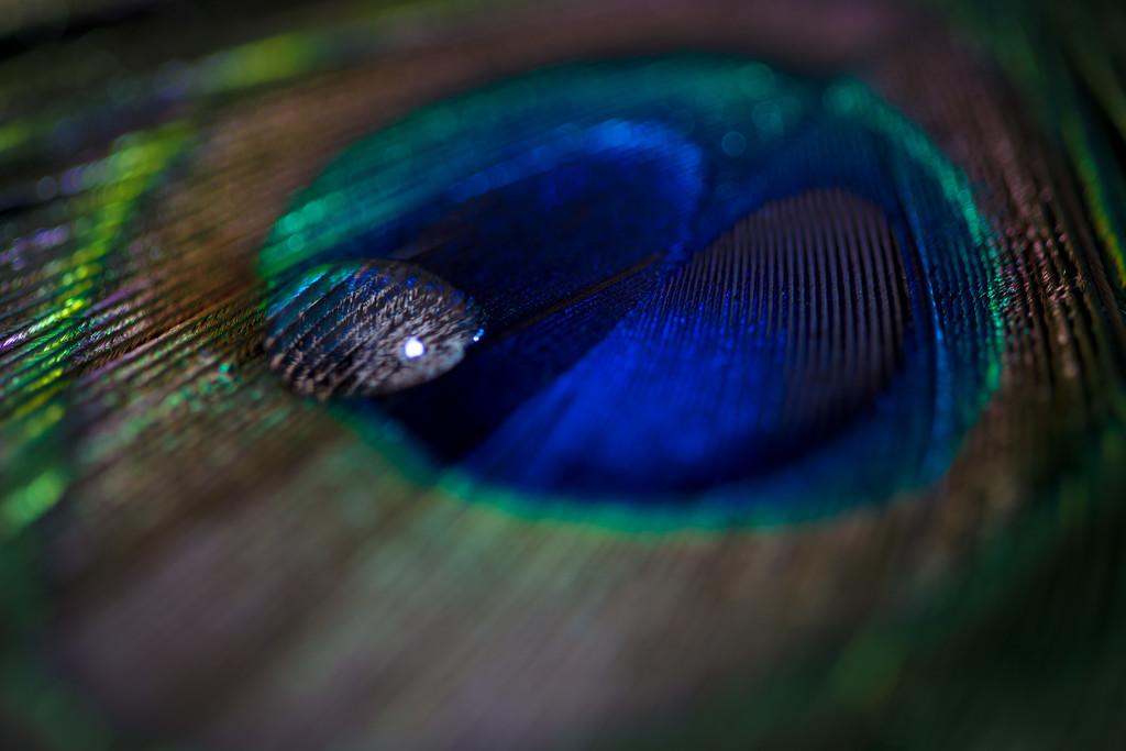 Metallic Eye by nicolecampbell