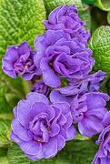 5th Mar 2017 - 2017 03 05 - Rainbow - Violet