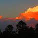 Reverse Sunset by koalagardens