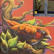 7th Mar 2017 - An Orange Bird From Bunbury......_DSC3968