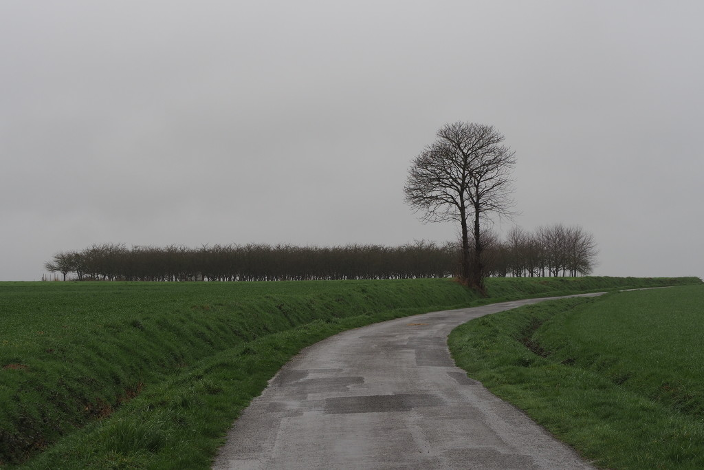 Follow the Patchwork Road by s4sayer