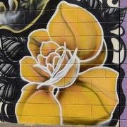 8th Mar 2017 - A Yellow Flower In Bunbury_DSC3586