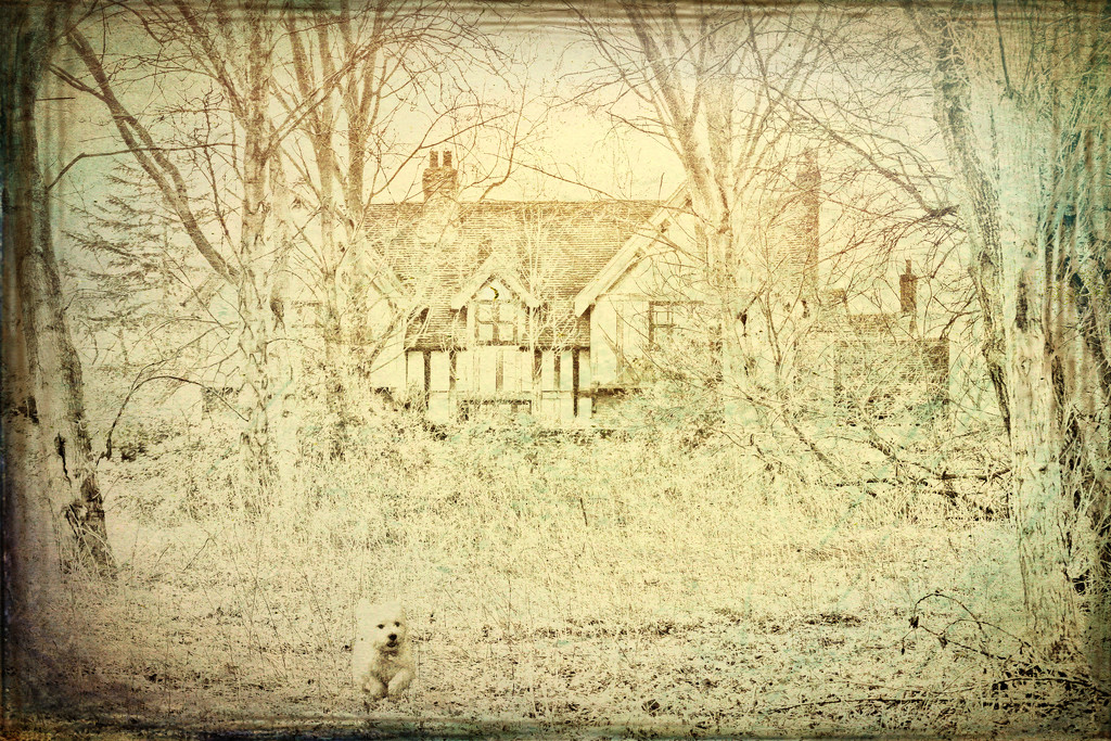 2017-03-08 - The House in the Woods by pamknowler