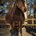 80 days till foal time