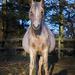 126 days till foal time