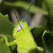 grasshopper un-cropped