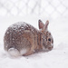 Snow Bunny!! by fayefaye